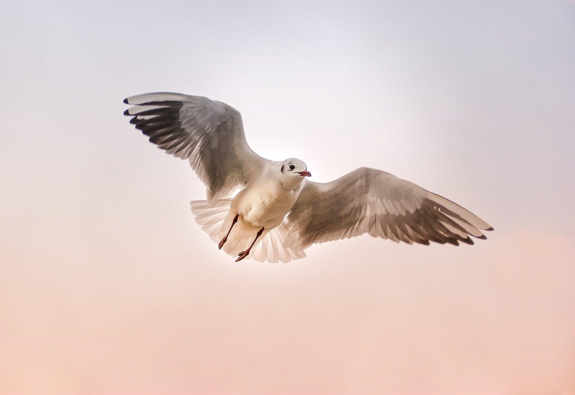 Vögelst du noch, oder fliegst du schon?
