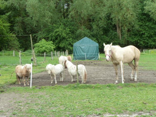 Lena und Herde