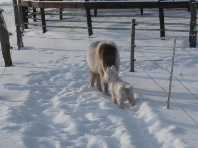 ...Vibi und Luna....gib Küßchen !