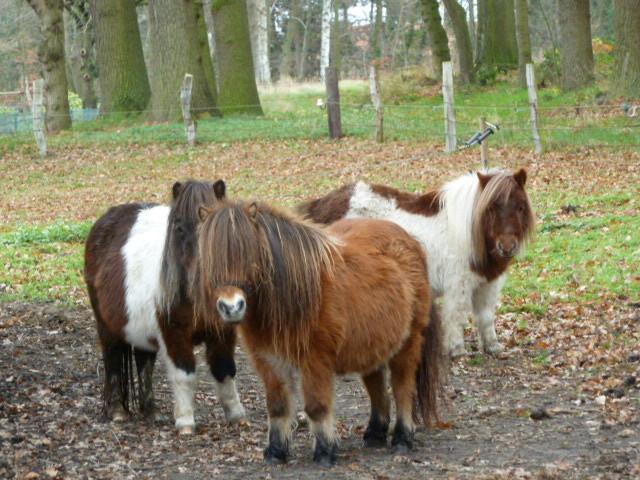 .....Bonny, Ymke...und, Cherie