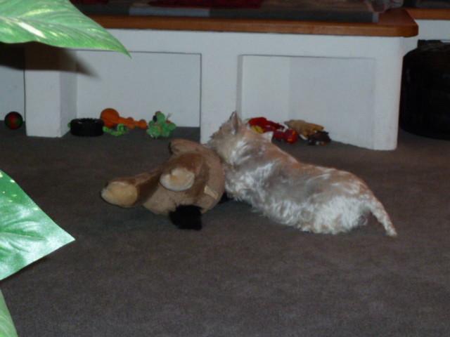 ...Luna kämpft mit ihrem Esel !