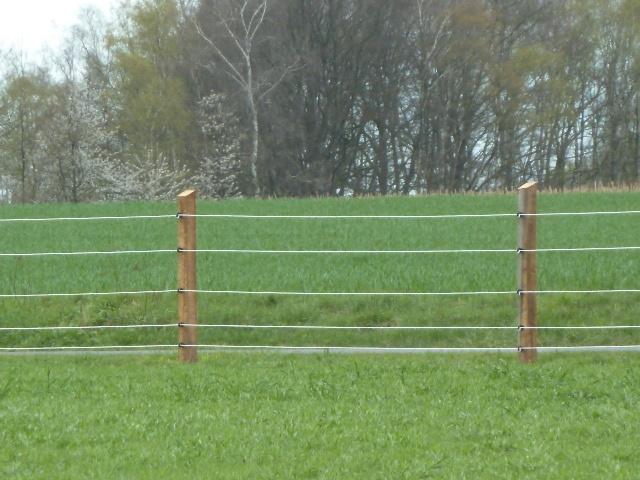 ---hat Herrchen gemacht....schocker Zaun....!