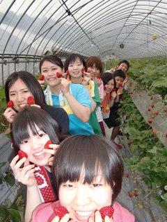 イチゴ狩り 観光農園