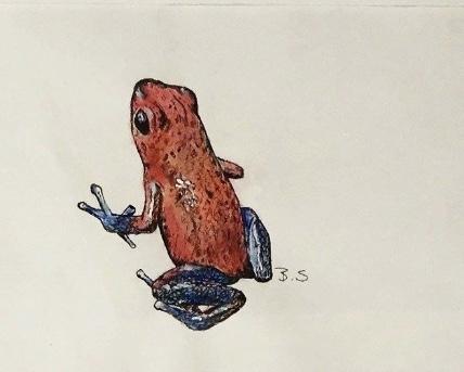 Roter Giftpfeilfrosch