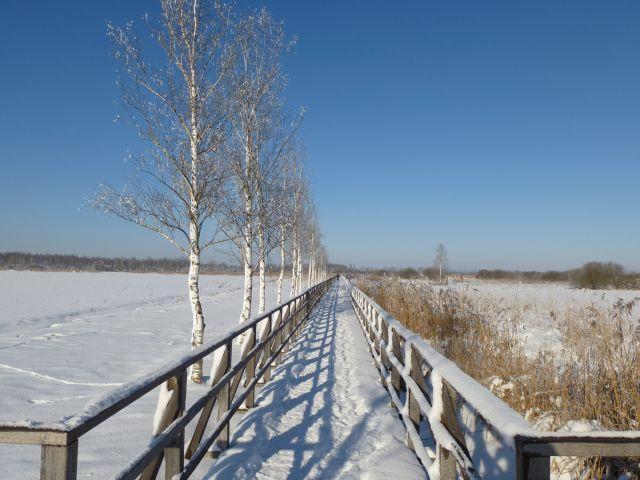 Winterspaziergang auf dem Federseesteg (Bild: NABU/Andreas Zeitler)
