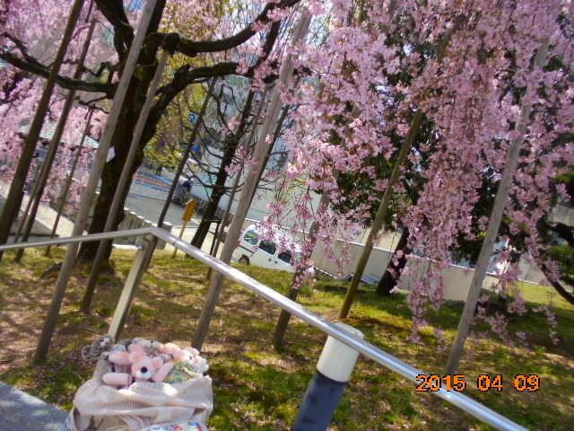 もう一枚桜です。