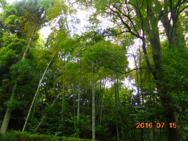竹林も美しい(人´∀`)