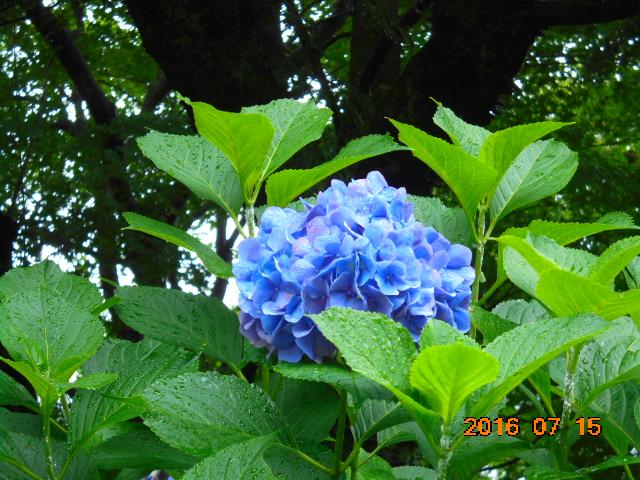 花って本当に綺麗だわ~っ。