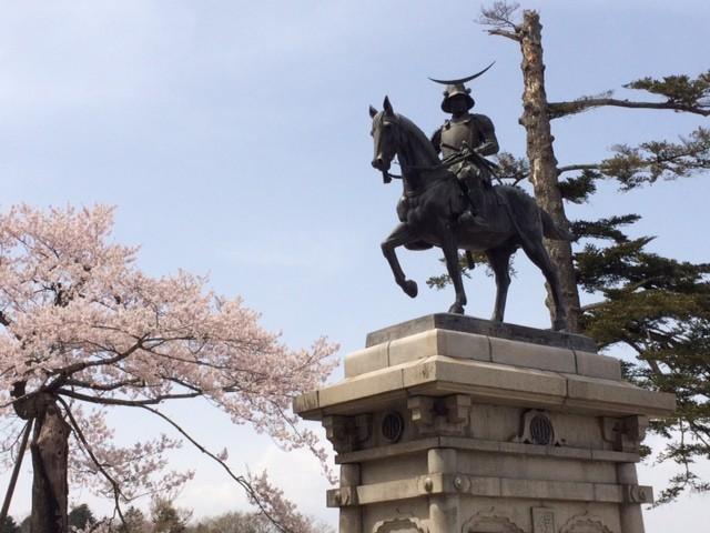 仙台の桜です