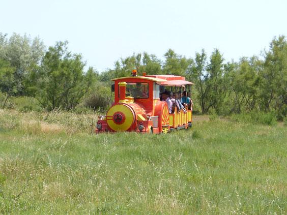 chevaux et taureaux  visite  en petit train entre Aigues_Mortes et les Saintes maries de la mer