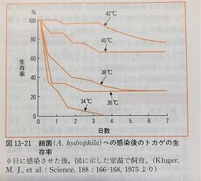 体温と鍼灸