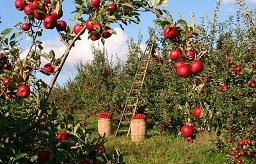 リンゴの木から学んだ福岡市紺堂はりきゅうつぼ治療院