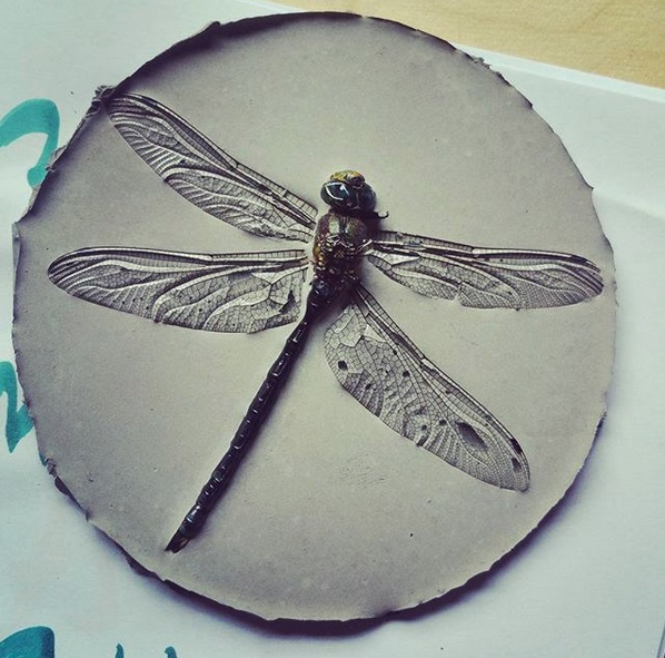 dragonfly in concrete