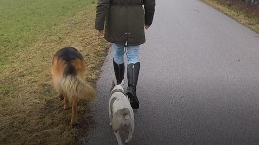 Hunde führen