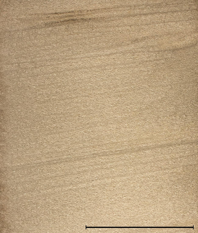 Handstück des Contorta-Sandsteins, Maßstab entspricht 5 cm.