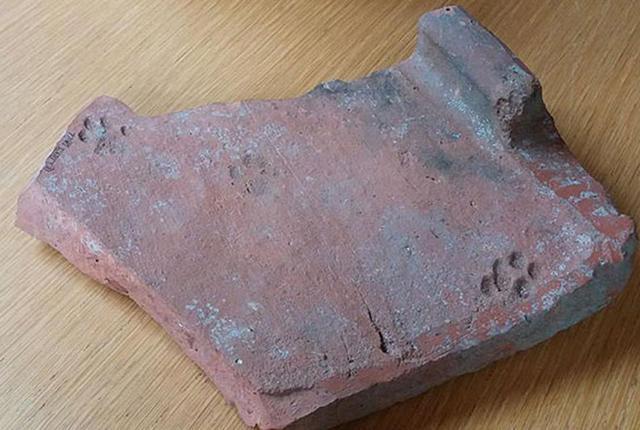 Tuile romaine empreinte de chat