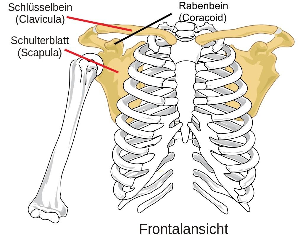 Muskuläres Gleichgewicht im Schultergürtel - Finally Fit
