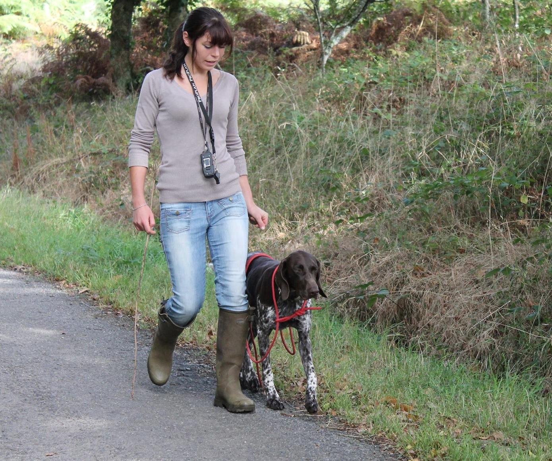 Dressage chiens d'arrêt - Coralicia élevage de griffon