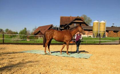 Das Pferd und ich lernen uns kennen, eine Vertrauensbasis wird geschaffen...