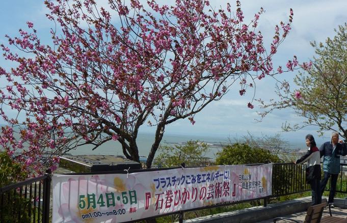 八重桜が満開で迎えてくれた日和山