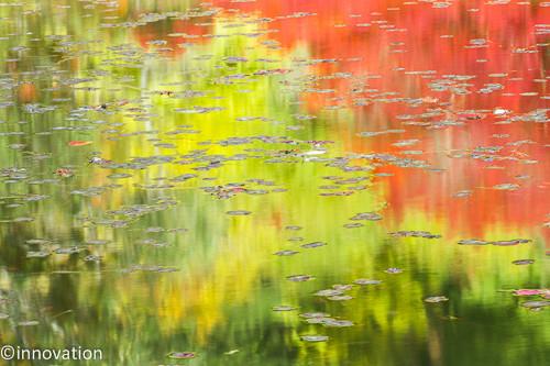 谷の紅葉のしたたる水です 山頭火