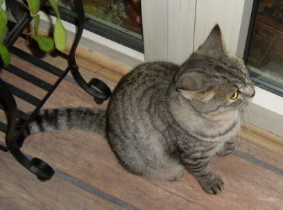 Pina von den Schugercats - will raus ...
