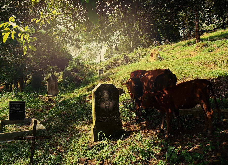 кладбище с тайным захоронением Тупака Шакура