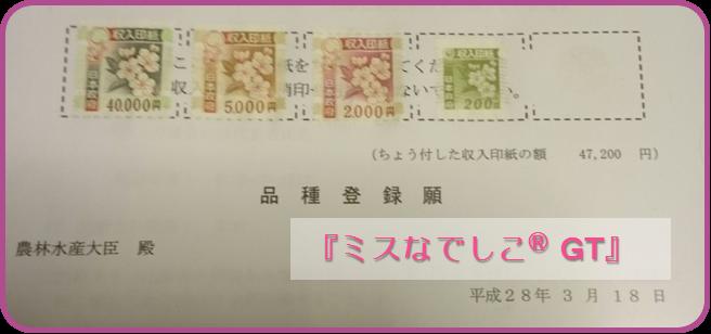 ミスなでしこⓇGT 品種登録出願 和×夢 nagomu farm