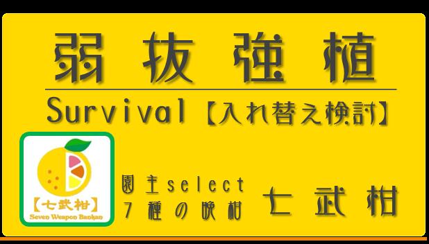 弱抜強植【七武柑 2016】 和×夢 nagomu farm