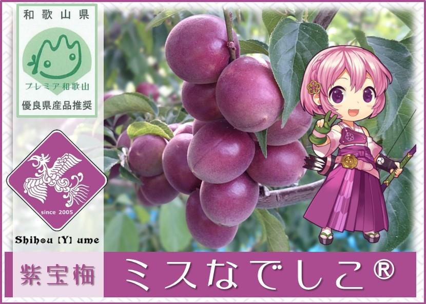 紫宝梅『ミスなでしこⓇ』青梅
