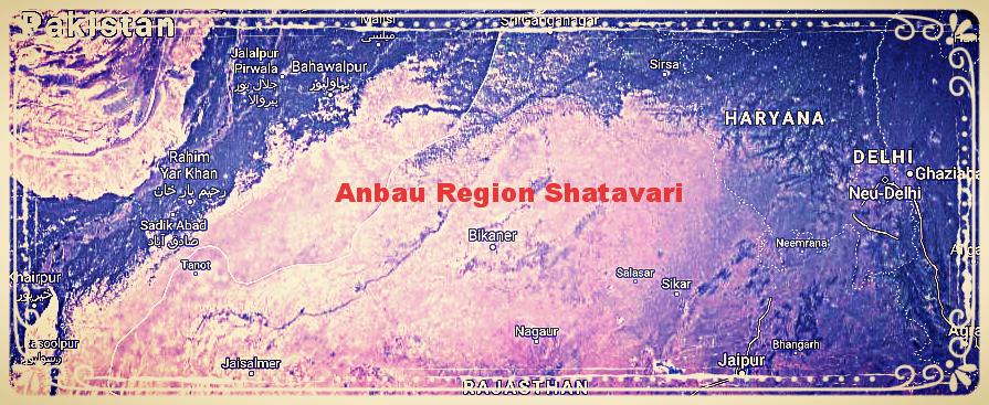 Frisch geerntet und importiert nördlich von Rajasthan in Indien