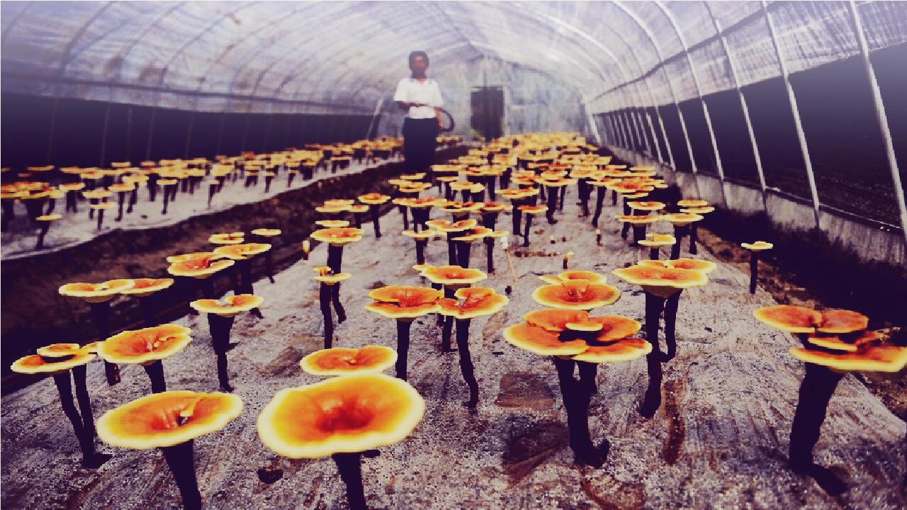 Zuchtfarm in China (Xining/Haidong)