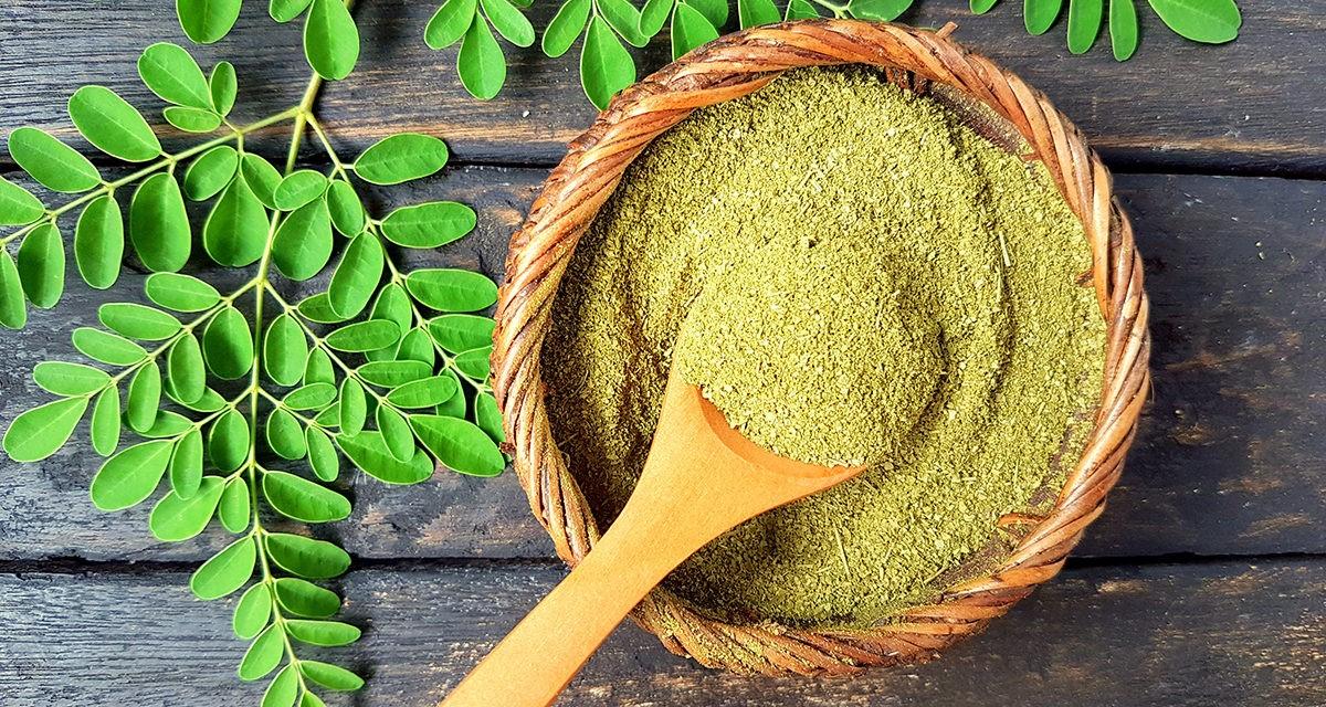 Die vielfältigen Vorteile des Moringa Baumes