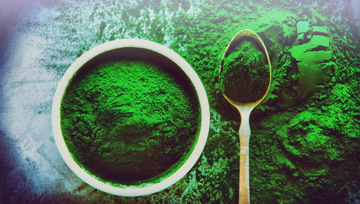 Frisch getrocknete Spirulina Algen.