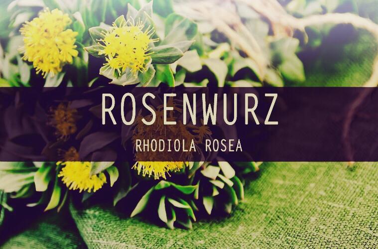 Rhodiola rosea als Anti-Stress-Pflanze