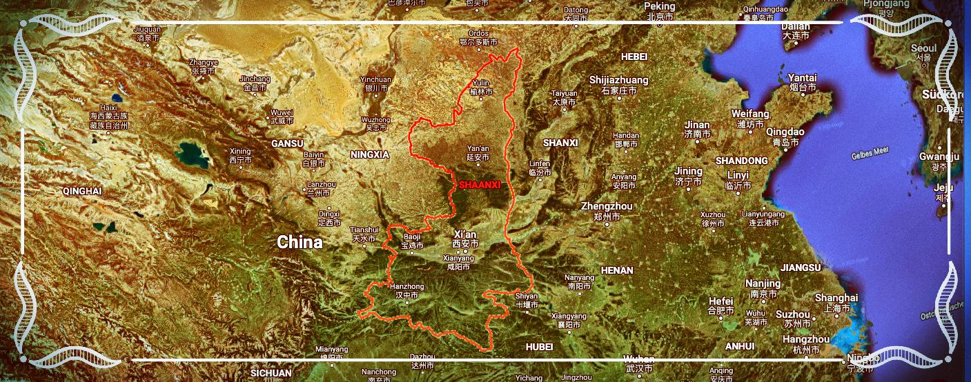Astragalus stammt aus der Provinz Shaanxi