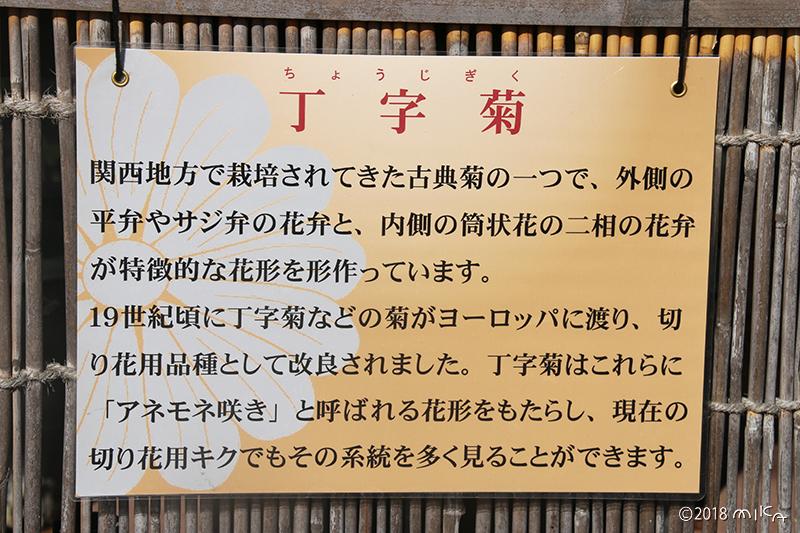丁字菊の説明(京都府立植物園)