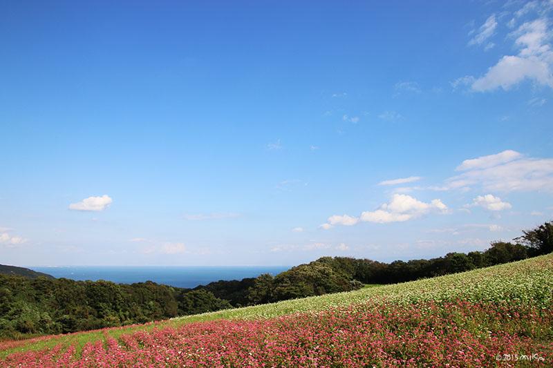 そばの花畑