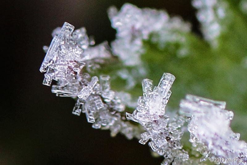 柱状の霜②