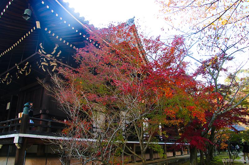 御影堂(みえどう)光明寺