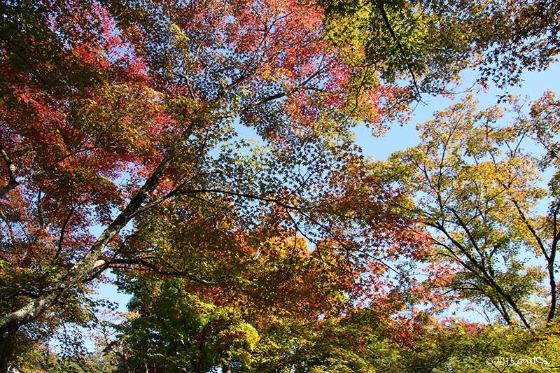 ほんのり紅葉(11月上旬 関西)