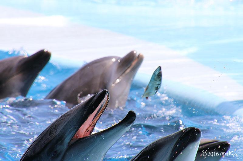 イルカのお食事タイム(白浜アドベンチャーワールド)