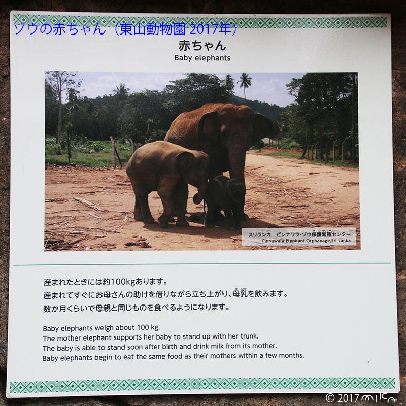 ゾウの赤ちゃんについて(東山動物園/2017年)
