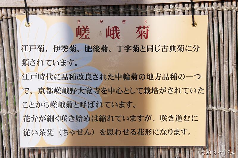 嵯峨菊の説明(京都府立植物園)