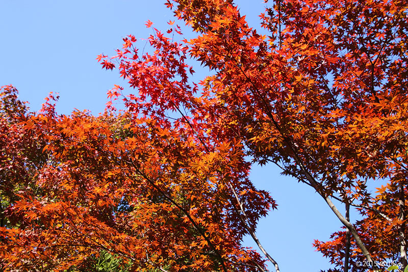 紅葉の始まり(11月上旬 関西)