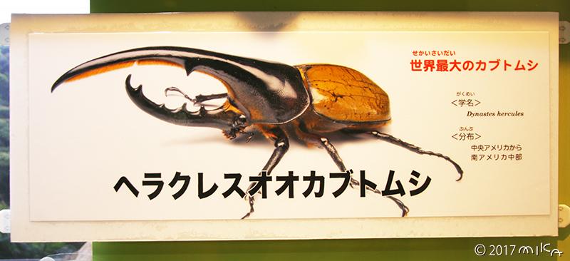ヘラクレスオオカブトムシの看板(伊丹市昆虫館)