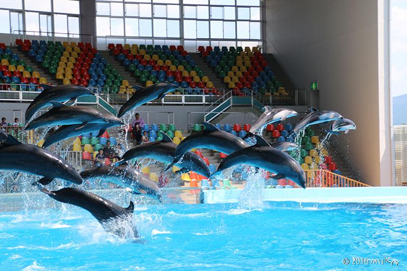イルカのジャンプ(白浜アドベンチャーワールド)