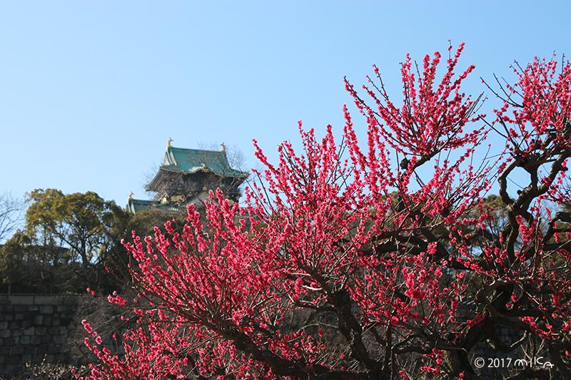 大阪城と梅林④(3月上旬)