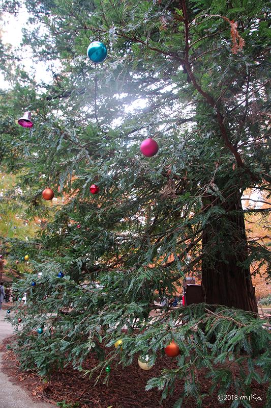 ツリーの装飾(神戸市立森林植物園)