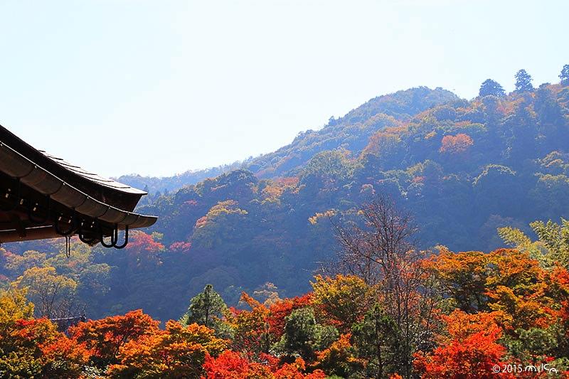 天龍寺の大方丈より(11月上旬)